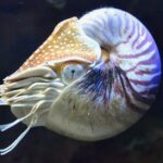 The Nautilus: Science and Symbol