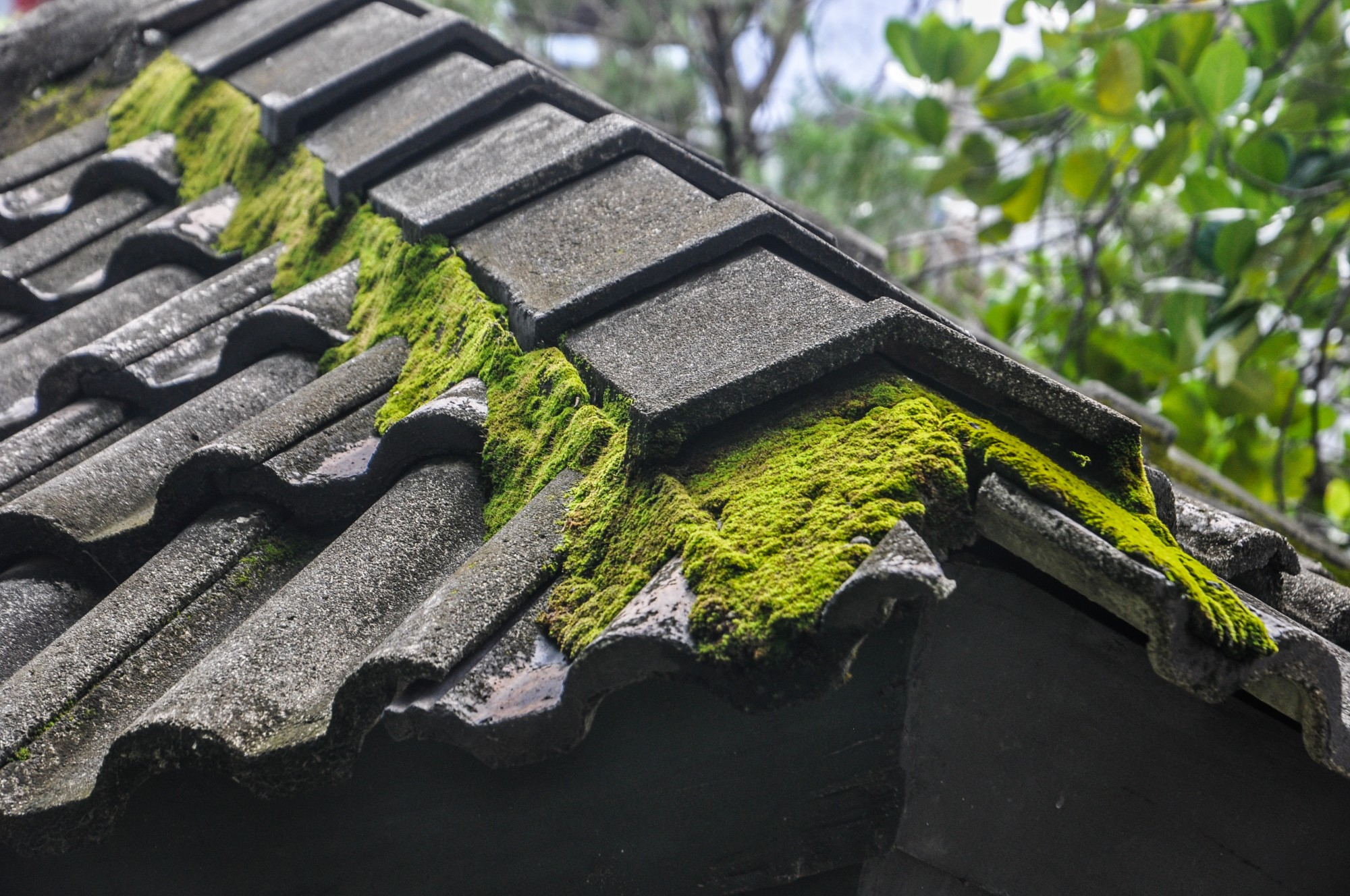 How to Remove Moss From the Roof