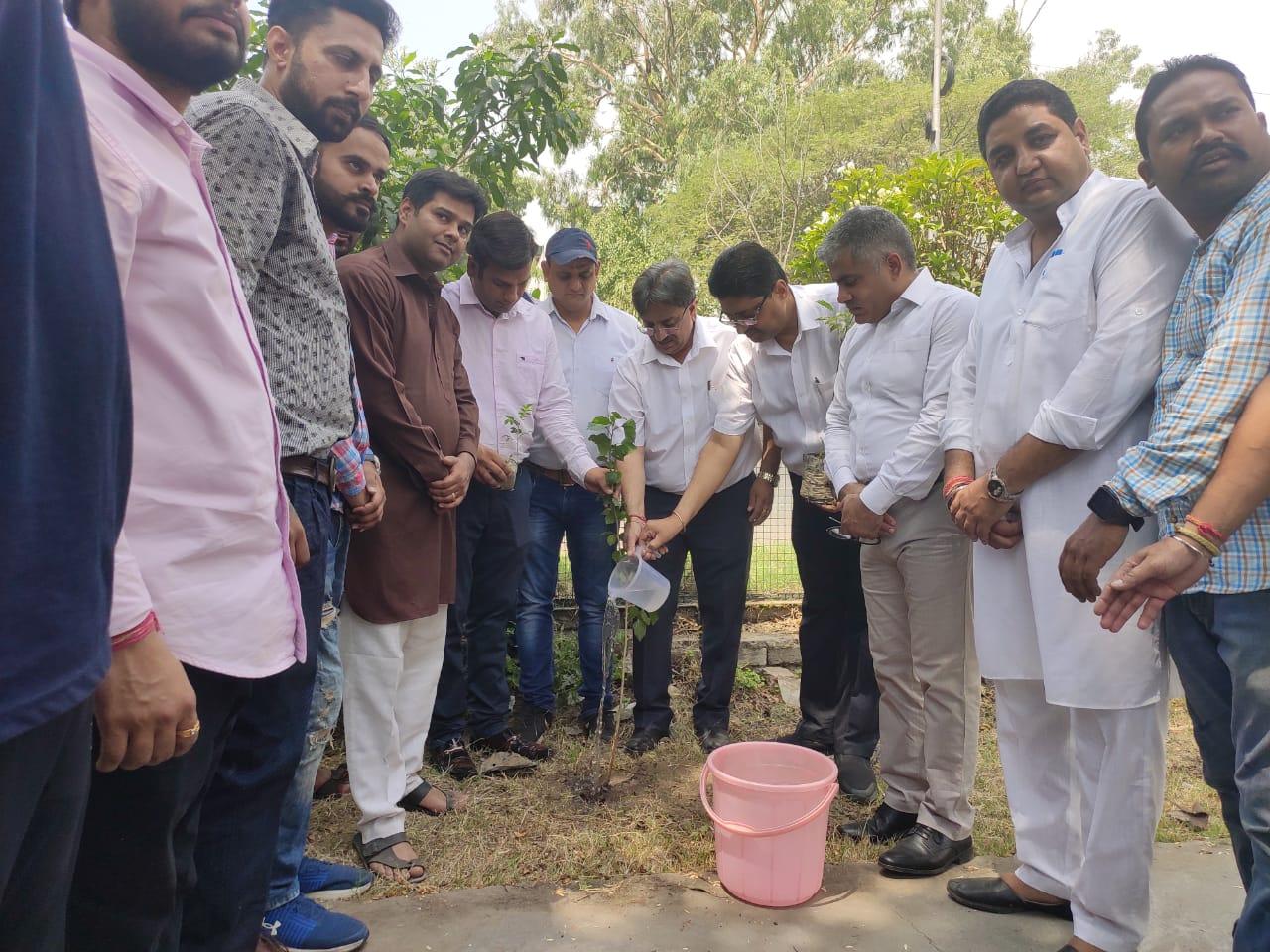 भाजपा स्पोर्ट्स सेल ने पौधे लगाकर मनाया विश्व पर्यावरण दिवस