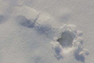 Small Snow Tunnel