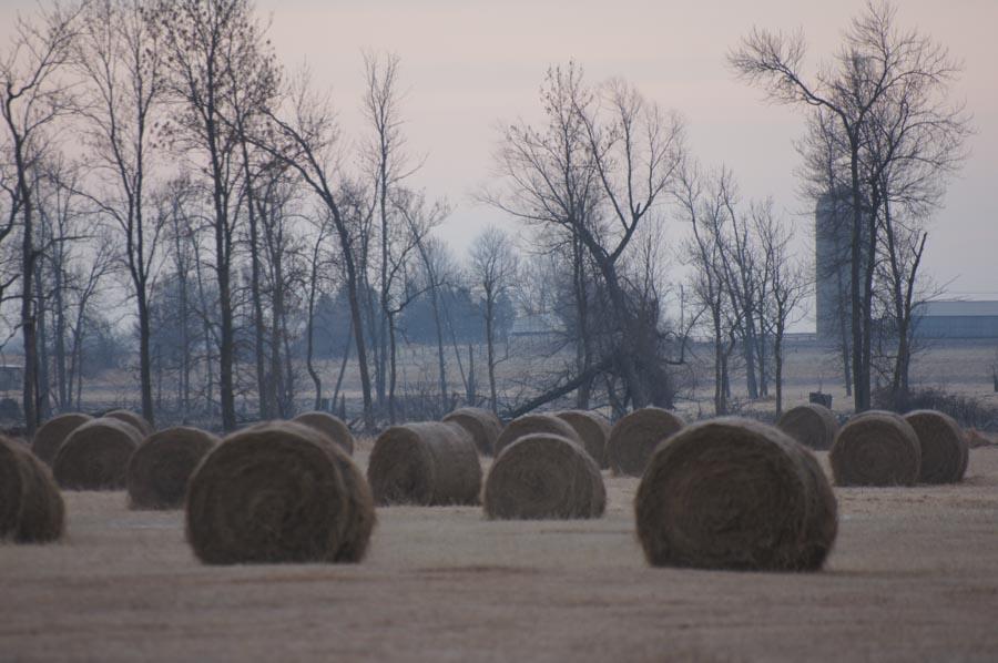 Reed Canary Grass hay