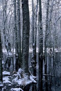 Hardwood Swamp Winter