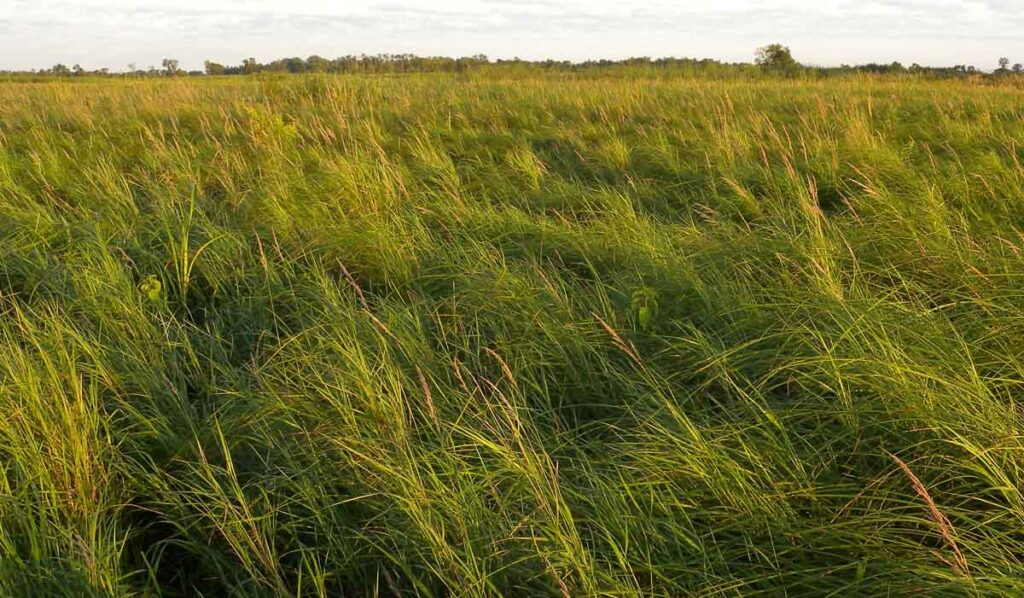 Grass-like plants