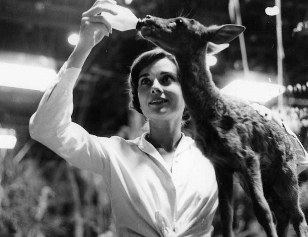Audrey Hepburn feeding her adopted deer