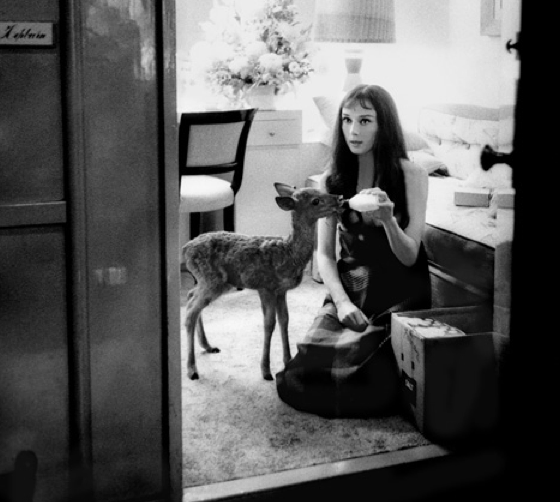 Audrey Hepburn had a pet fawn named Ip