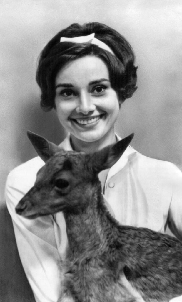 Audrey Hepburn poses holding a young deer.