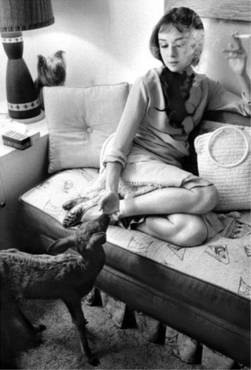 Audrey Hepburn's Pet Deer