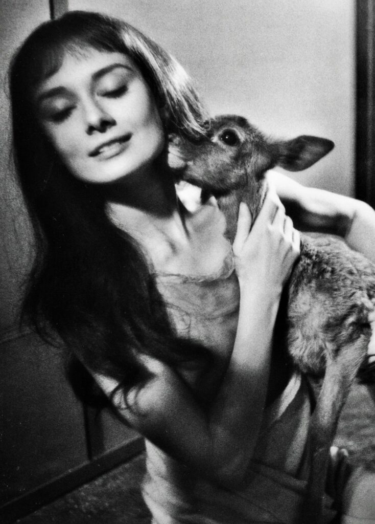 Audrey Hepburn and her deer Pippin