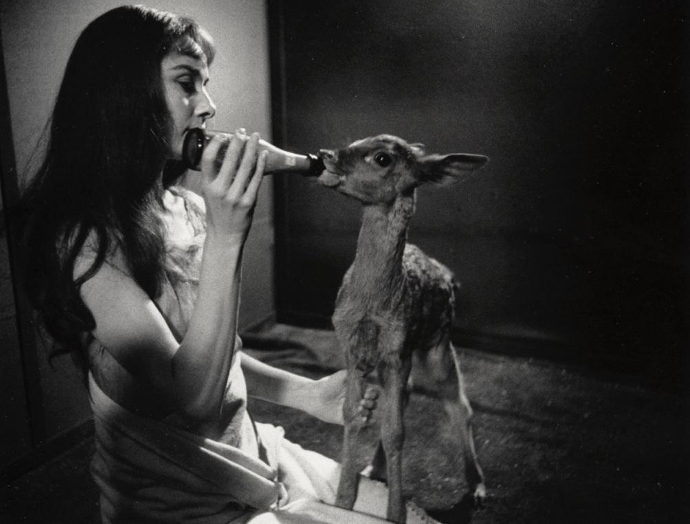 Audrey Hepburn feeding her deer