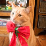 Skid the shop cat ready for Christmas