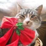 Slug the shop cat ready for Christmas