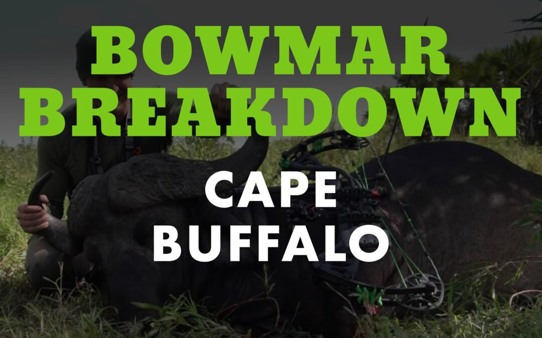Josh Bowmar's Cape Buffalo | Bowmar Breakdown
