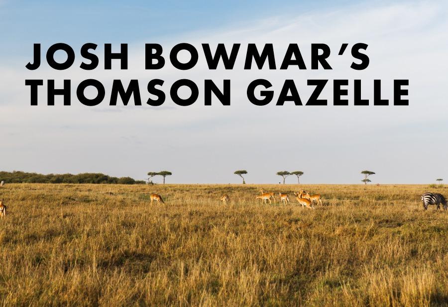 Josh Bowmar's Thomson's Gazelle