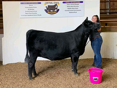 Champion Breeding Heifer, Central IA Showdown, Greimans Barbara 89