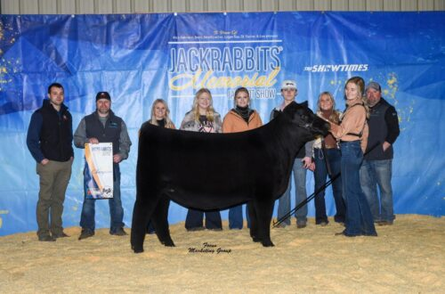 Champion Angus Female, 2021 Jackrabbits Memorial, Shown by Macey Miller