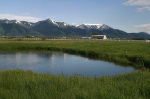 Burton Springs Ranch