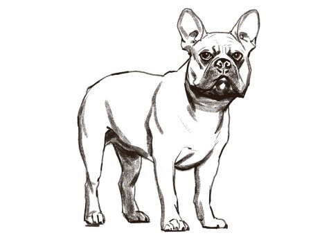 Storyboard Artist: Lenin Delsol > Style: Black & White  Tone  > Category: Animals, Dogs, Pets