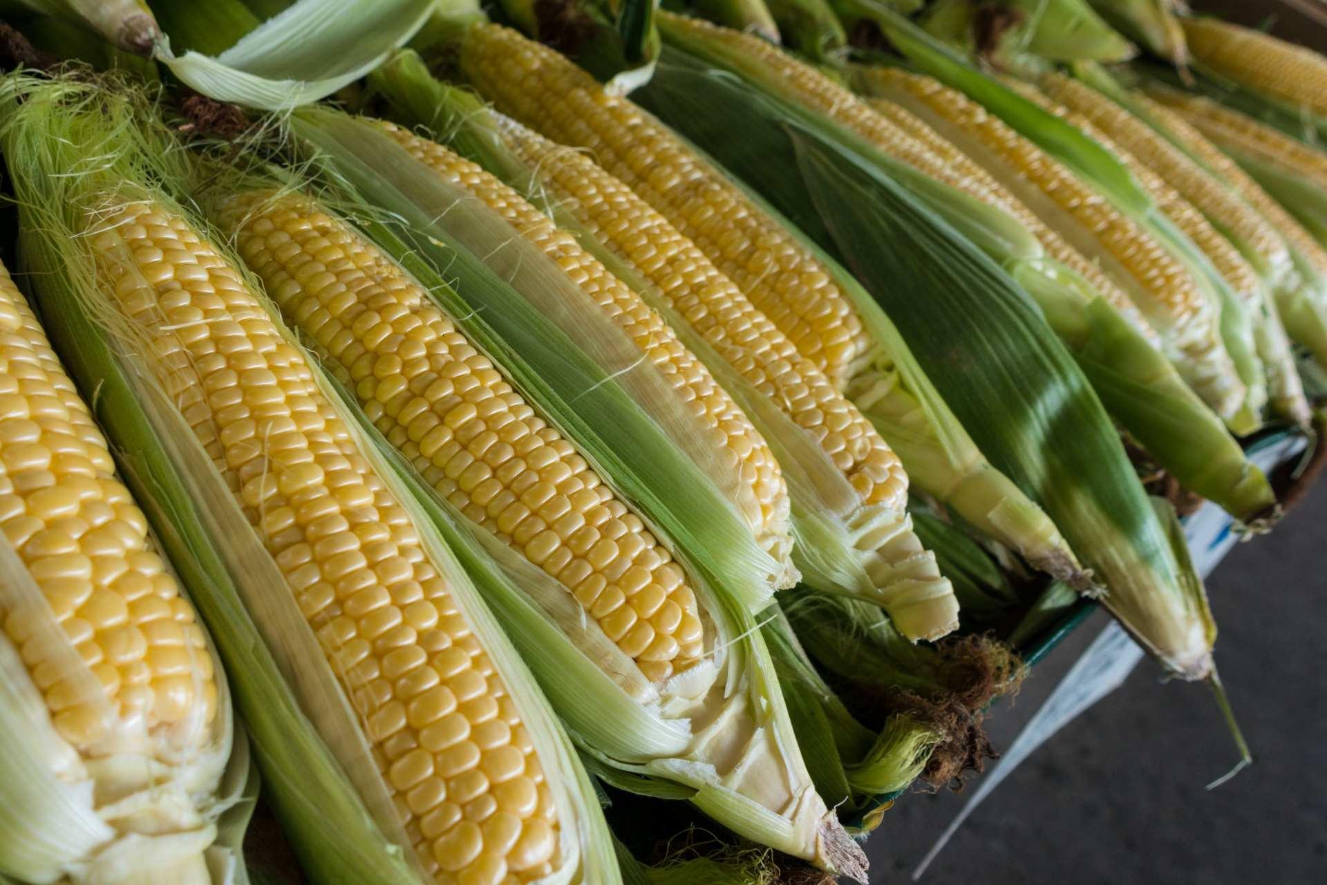 Corn Next