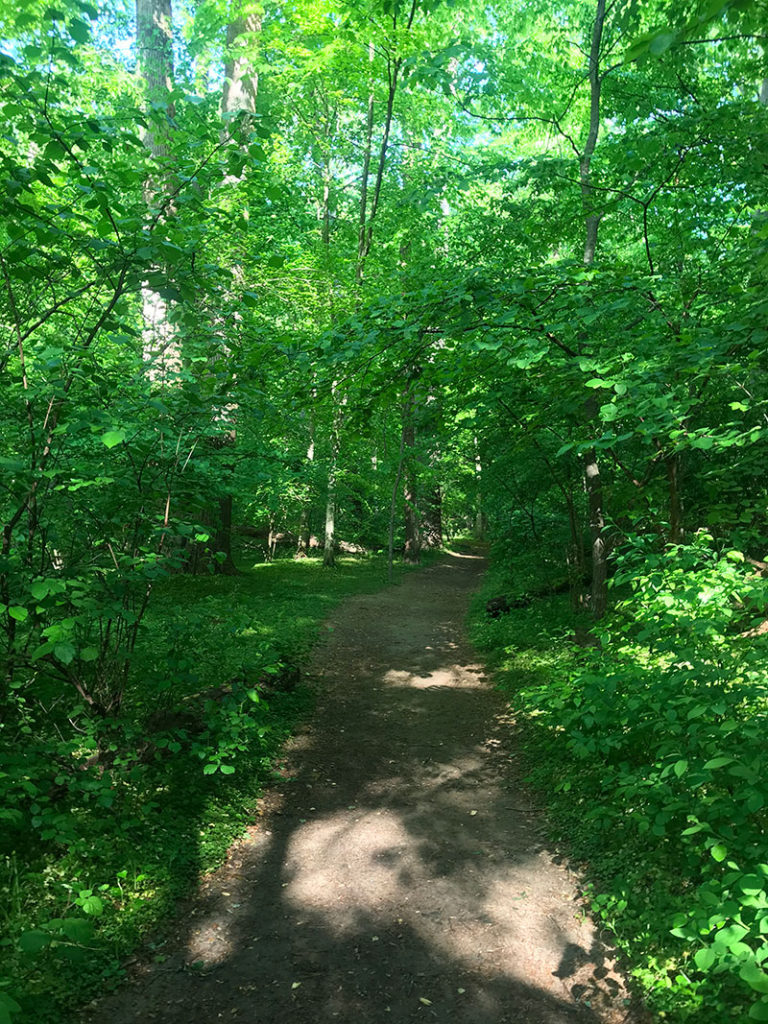 A trail at Rock Creek Park in the spring