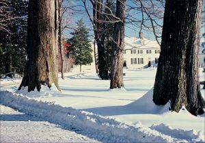 Winter trees at Mount Vernon