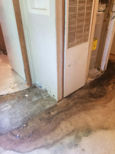 Mold growing on drywall in st louis