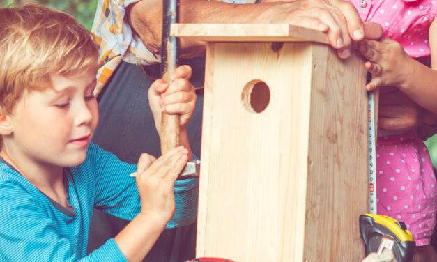 Create a bird-friendly yard