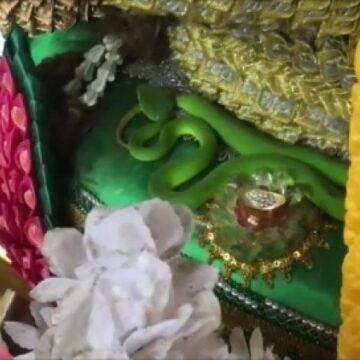 ฮือฮา!!! งูเขียวโผล่จำศีลศาลปู่ศรีสุทโธ คำชะโนด แห่ตีเลขเด็ด