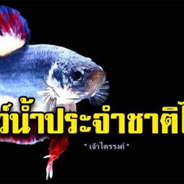 """อนุมัติแล้ว!! """"ปลากัด"""" เป็นสัตว์น้ำประจำชาติ สร้างรายได้เกษตรกร หนุนส่งออกเพิ่มปีละ 115 ล้านบาท"""