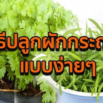 วิธีปลูกผักกระถาง มีผักสด ๆ ไว้กินที่บ้านทุกวัน ไม่ต้องซื้อ
