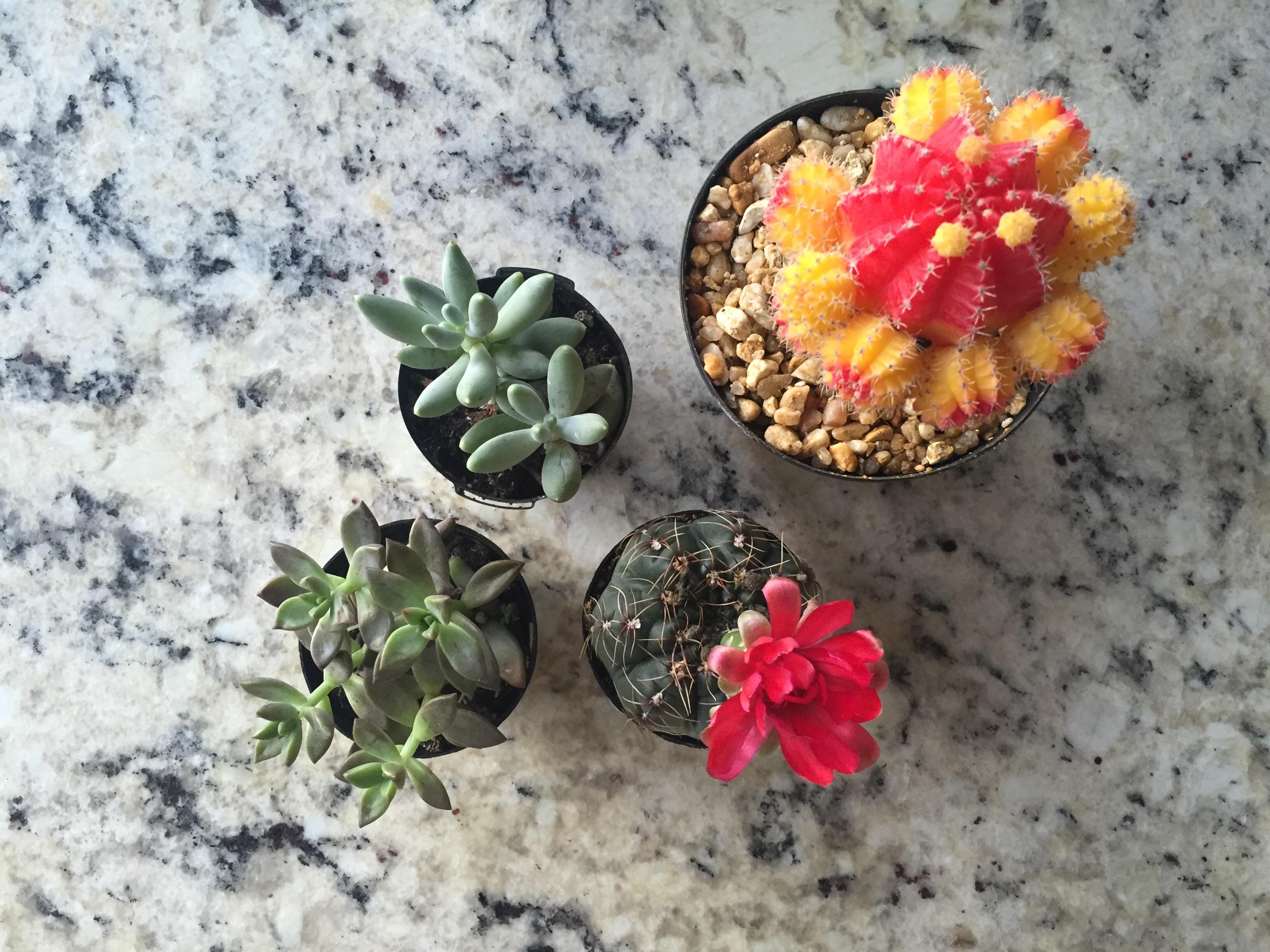 diy succulent terrarium, cute succulent terrariums, how to set up succulent terrarium, how to make succulent terrarium