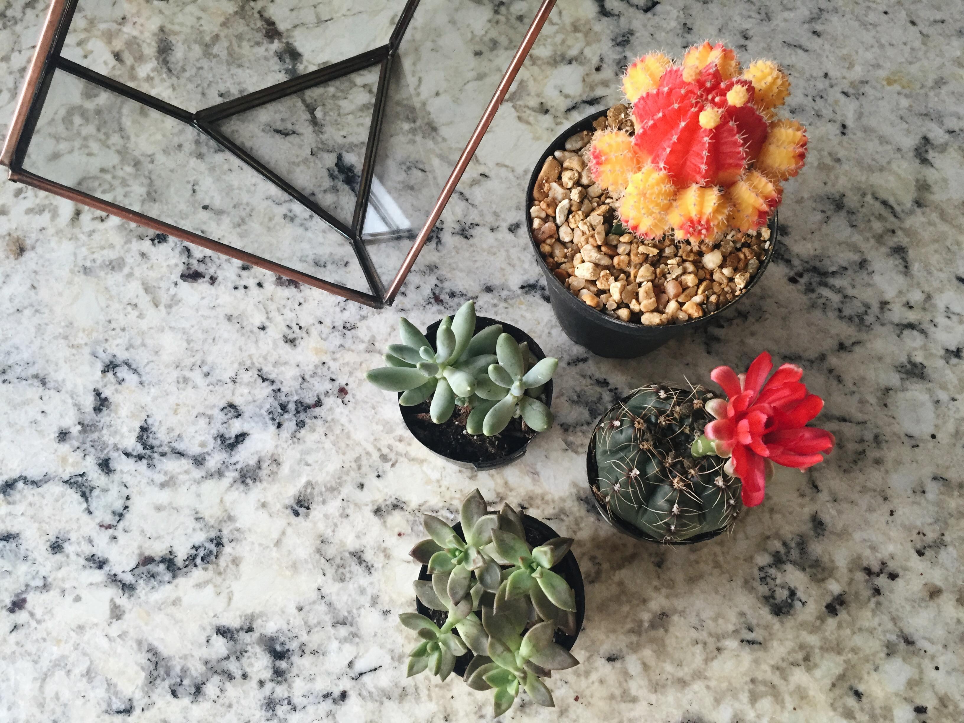 cute succulent terrarium ideas, cute cactus terrarium ideas, cactus terrarium diy, how to make succulent terrarium