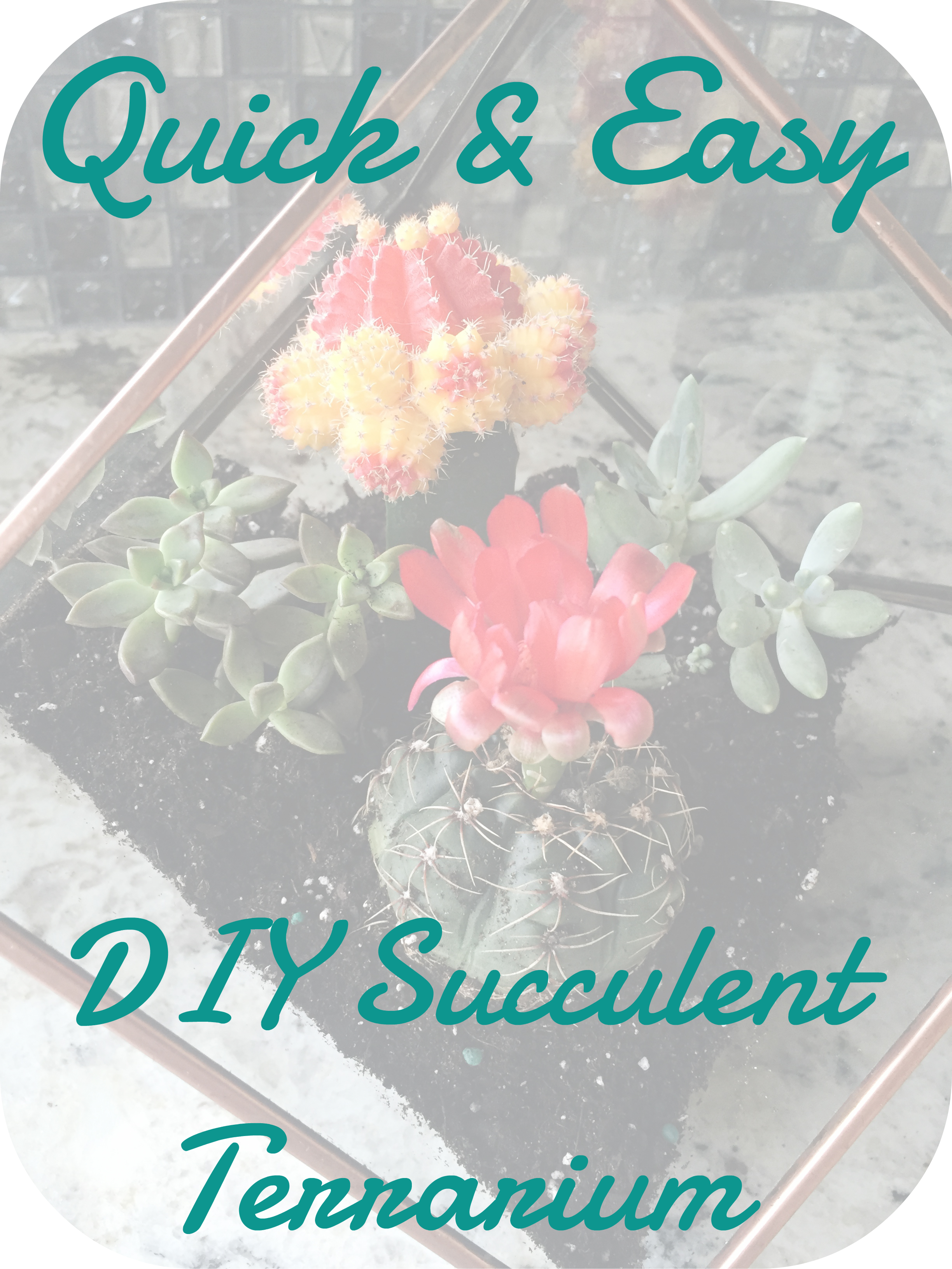 easy succulent terrarium diy, quick succulent terrarium diy, how to make succulent terrarium, lifestyle blogs, best female blogs, best lifestyle blogs