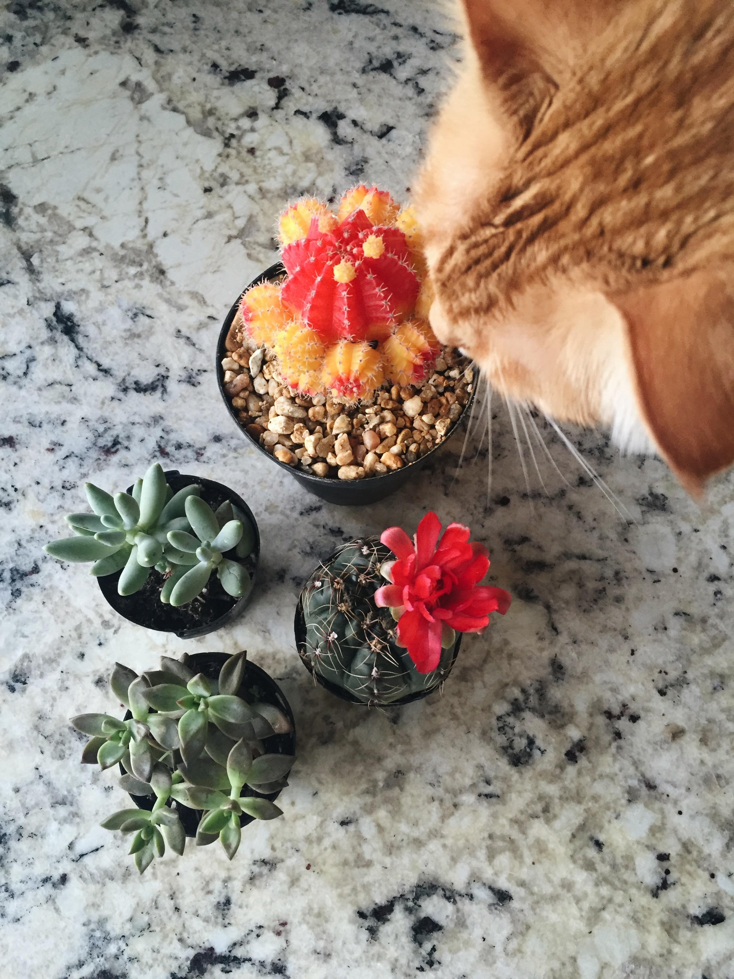 cute succulent terrarium di, quick diy succulent terrarium, quick cactus terrarium, how to make cactus terrarium, cute cactus terrarium ideas, cute succulent terrarium ideas, terrarium ideas, succulent terrarium layouts