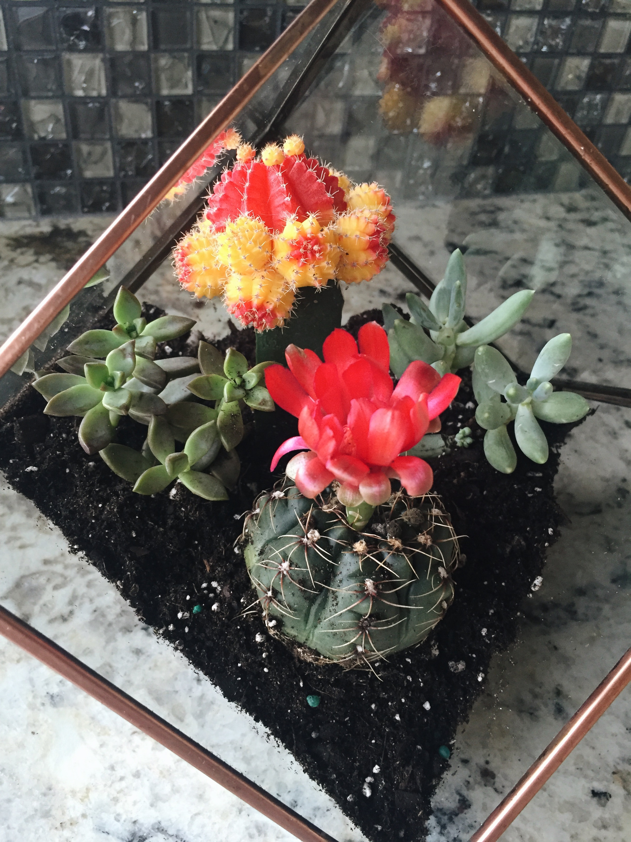how to make a succulent terrarium, quick succulent terrarium diy, cute lifestyle blog, diy blogs