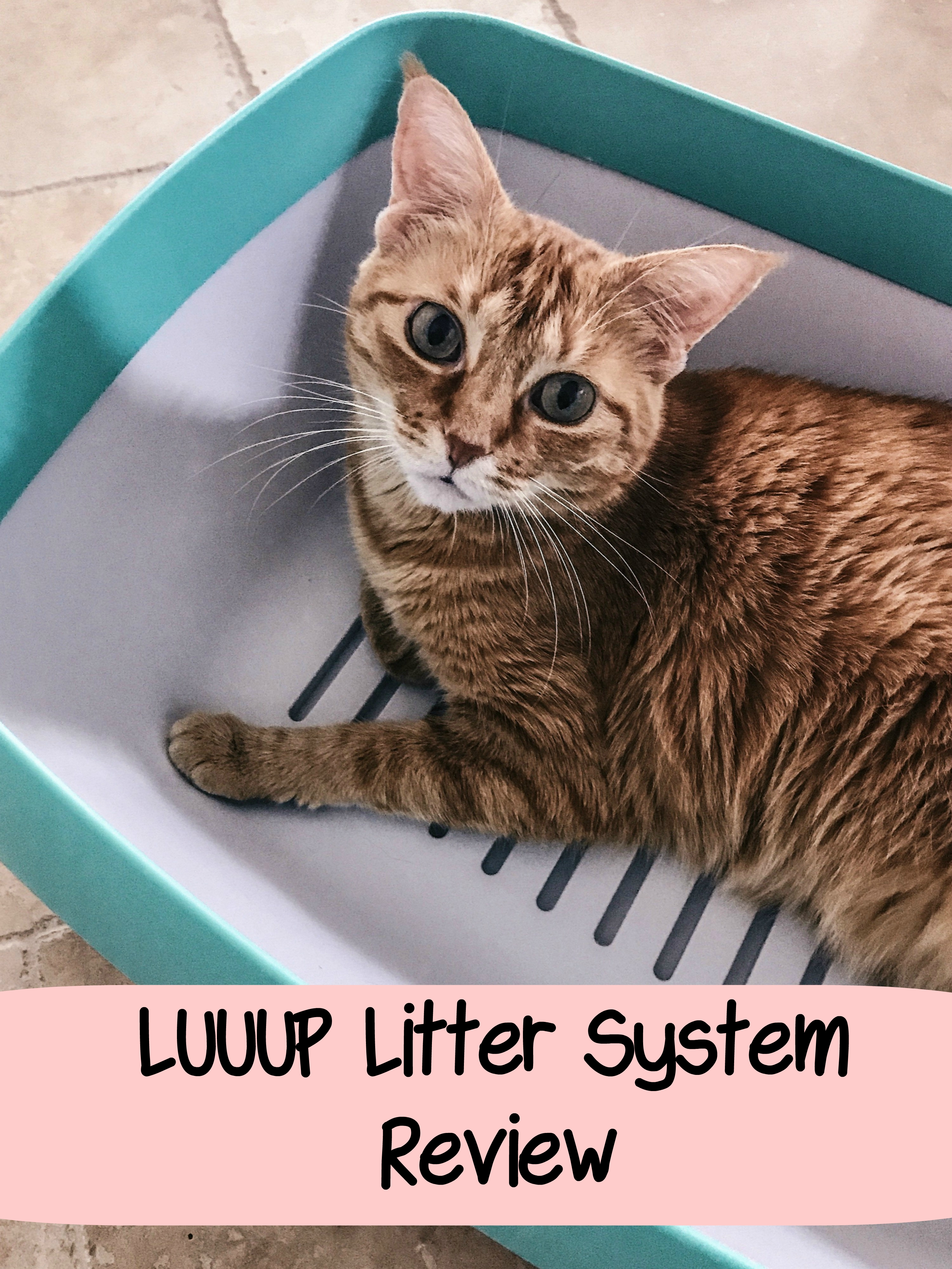 litter box review, luuup system, luuup reviews, best litter boxes, litter systems, best litter system