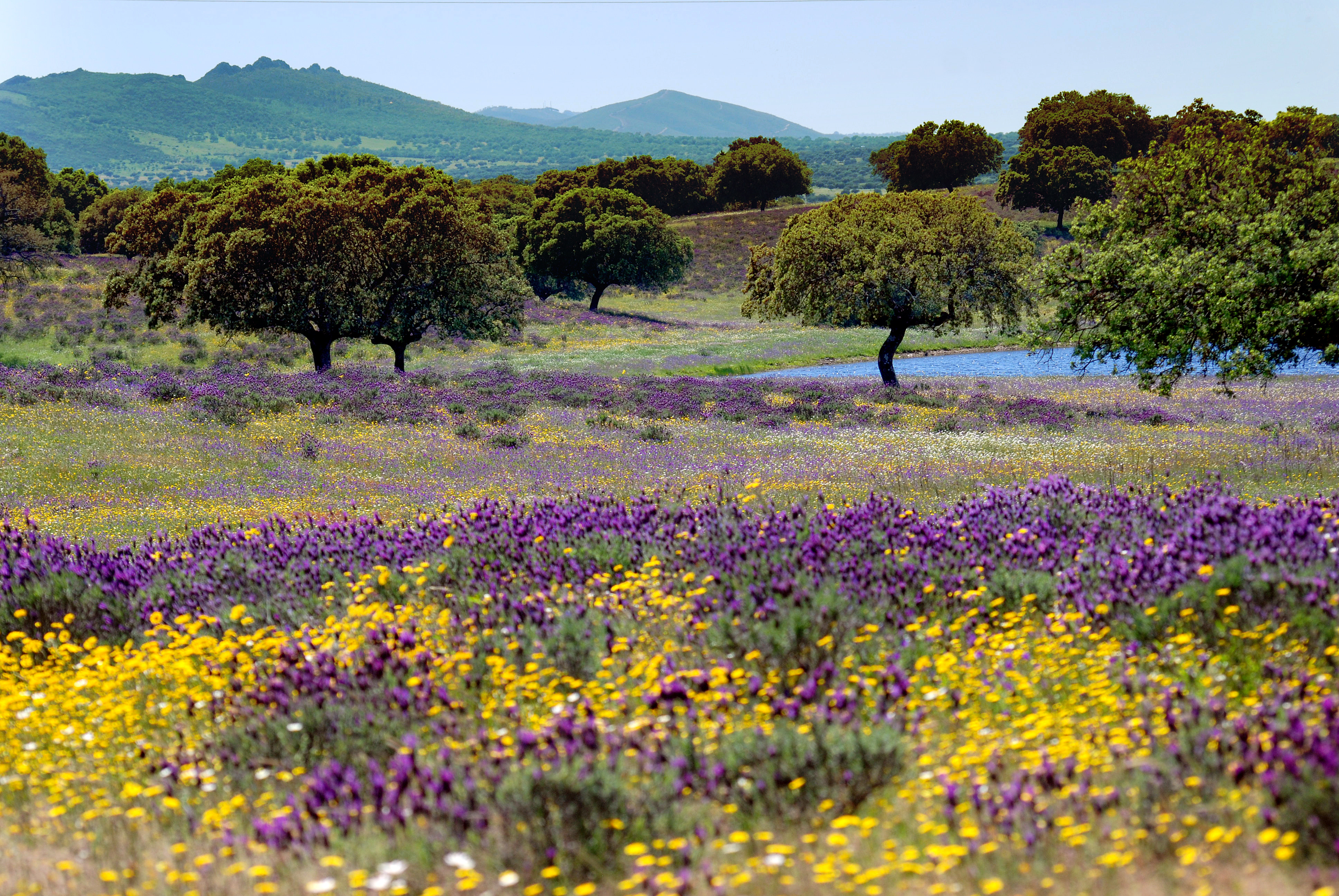 spanish vacations, where to visit in Spring, Springtime vacation ideas, Spain places to visit