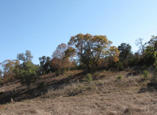 oak hill ranch 6
