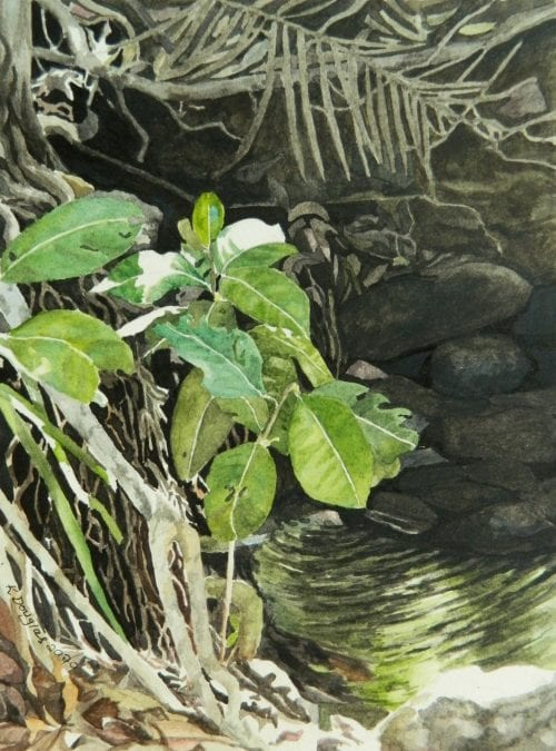 Rainforest creek by Kate Douglas, available to buy online