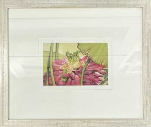 Home, Green Frog on Lily by Sandra Temple