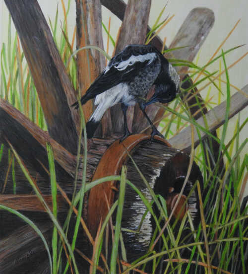 Young Magpie painting by Sandra Temple