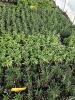 more-herbs_0