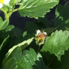 beesworkingstrawberries