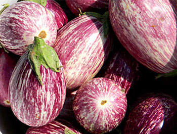eggplants2012