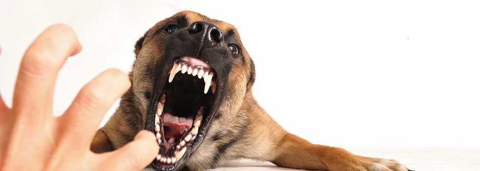 Las Vegas Dog Bite Injury Lawyer | Behzadi Law Offices