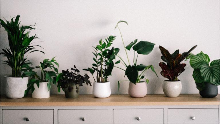 Best Dorm Room Plants