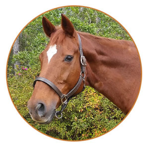 rosie equine instructor ormond beach riding lessons