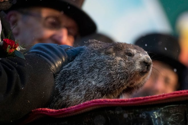Phil The Groundhog and An Unremembered Holiday