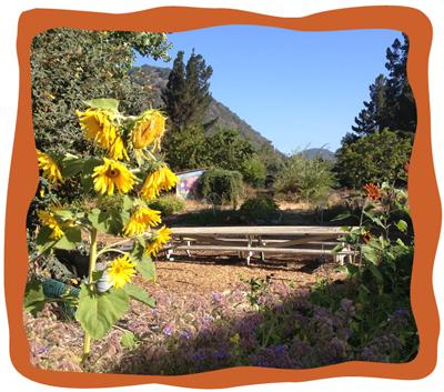 Garden-2013-Fall