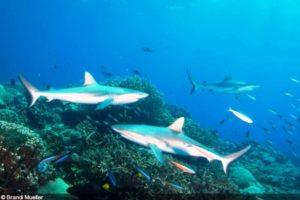 Largest Shark Sanctuary Marshall islands