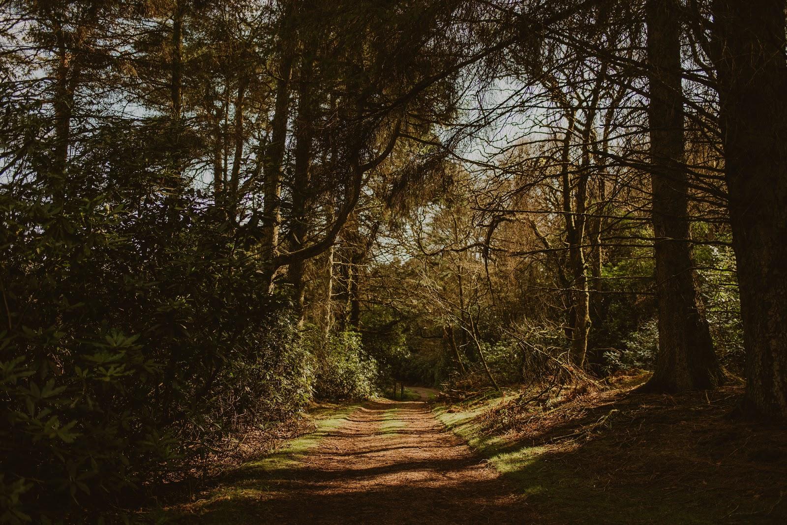 Dunksey Estate grounds